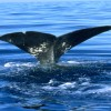 Kanaren/La Palma: Wale und Delfine Teil 1