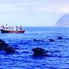 Erstes Buch zur Bestimmung von Walen und Delfinen der Kanaren jetzt im Handel