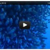 Video made in La Palma: Der Sommer unter Wasser