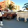 La Palma: Viehmarkt und Trachtentag in Los Llanos am 29. Juni