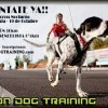La Palma – Breña Baja: Moon-Dog-Training 2013