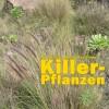Lampenputzergras gefährdet Kanarenflora