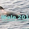 Internationale Walschutzkonferenz 2016: Rückblick