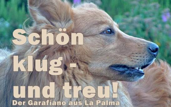 Der Pastor Garafíano – ein toller Hund