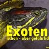 Exotische Haustiere Kanaren: bis 2. August 2014 anmelden!