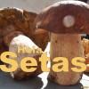 La Palma 24-Praxistest: Pilzsuche auf der Isla Bonita