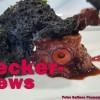 La Palma Essen & Trinken: Lecker-News am 16.9.2015