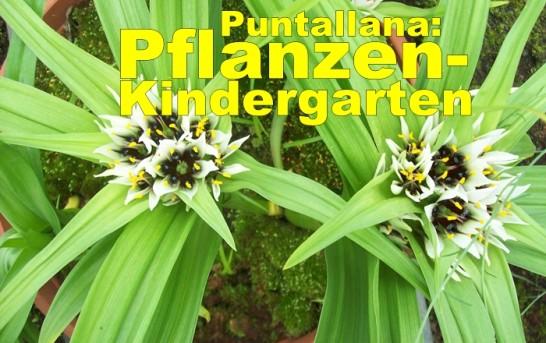 Der Vivero des Umweltamtes in Puntallana