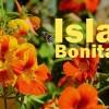 Frühling auf La Palma in Bildern