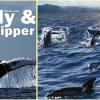 Wale und Delfine: Nachrichten im Frühjahr 2018