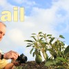 Helmut Schilling filmt La Palma