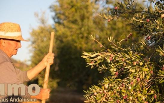 Durch Zufall ein leckeres Olivenöl entdeckt