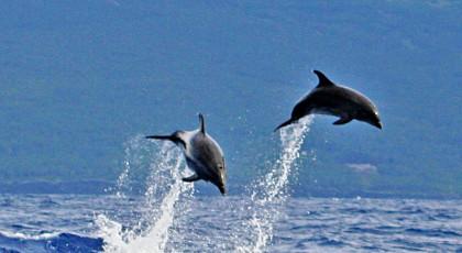 hebben dolfijnen tanden