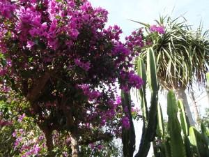 Katyflor: mehr als 1.500 blühende Pflanzen.