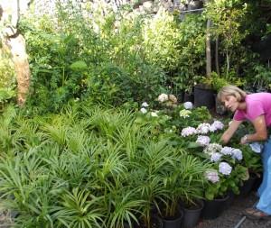 Caty hat den grünen Daumen der Oma geerbt: statt Bauunternehmerin Gärtnerin geworden. Foto: La Palma 24