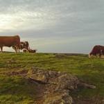 El HIerros Inselboden hob sich an: Menschen und auch Kühe merken das aber nicht.