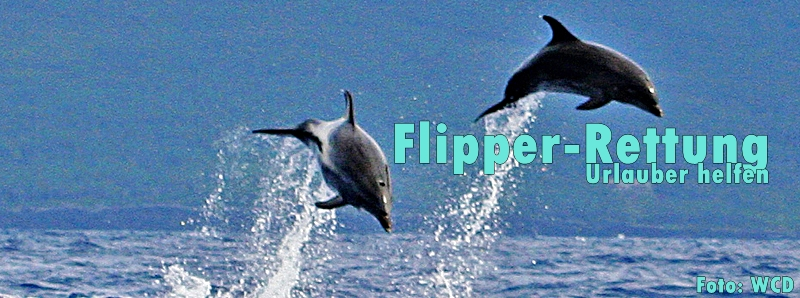 Flipper-WDC-Foto