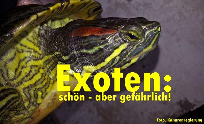 Foto-Echse-Kanarenregierung-Titel