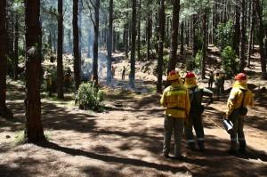 Unterholz und Gebüsch sind die größten Gefahren: Mitarbeiter des Umweltamts von La Palma säubern deshalb die Wälder vom Zunder, wo sie nur können. Foto: Medio Ambiente