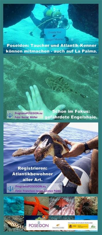 Bild-Poseidon