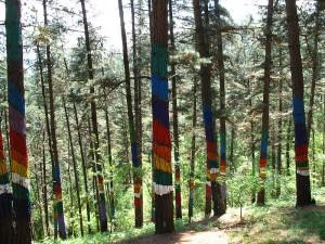 Bosque de Oma: dddd schafft Museen in freier Natur. Foto: Wikipedia/Simonico