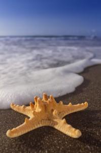 Baden im Winter wie im Sommer: Kanarenregierung wirbt für die Inseln im Januar 2015 wieder auf internationalen Tourismusmessen. Pressefoto Promotur Canarias/Alex Bramwell