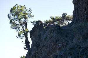 MTB auf La Palma: teils wild und steil. Foto: Kirsten Sörries