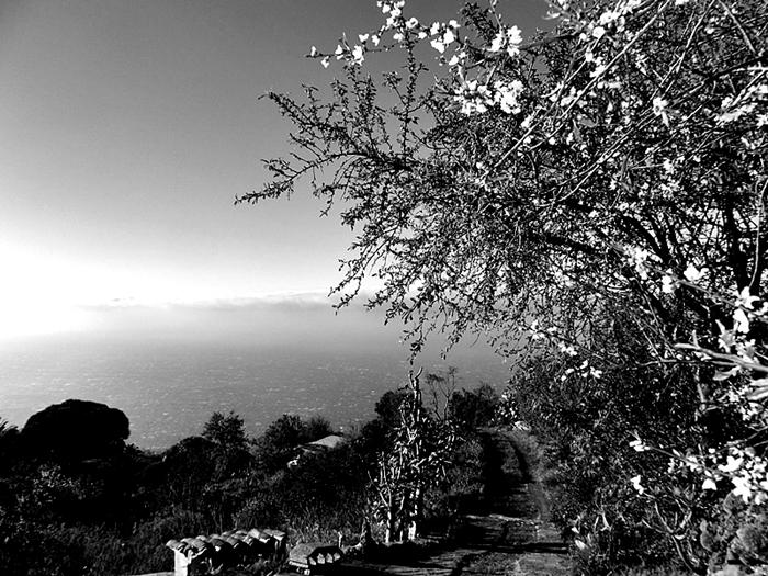 Diesen Blick nach Westen genießt Eremiot von seinem Haus in Las Tricias aus: Kein Wunder, dass ihm schöne Songs einfallen... Foto: La Palma 24