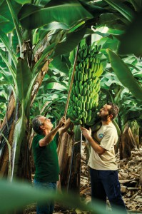 Plátanos auf den Kanaren: Neuer Werbefilm der Erzeugervereinigung. Foto: ASPROCAN