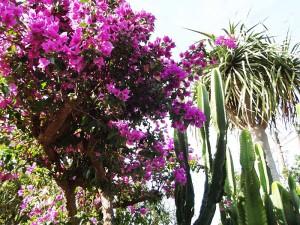 Gärtnerei Katyflor in Los Llanos: mehr als 1.500 blühende Pflanzen.