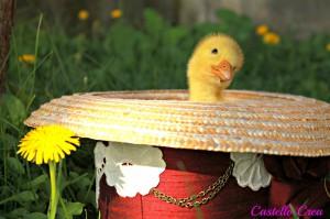 Miss Monney Pennie: schlüpfte aus einem deutschen Ei und macht jetzt als Pressesprecherin des Chico de los Balcones Werbung für die Kanareninsel La Palma. Foto: Fernando Rodríguez/Palmeros en el Mundo