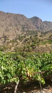 Weine auf La Palma: Nach Ansicht von