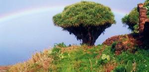 Drachenbaum mit Regenbogen: Antje ist auch mit der Kamera unterwegs.