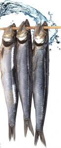 Fisch und mehr: Immer mal wieder Schlemmertouren. Foto: Ruta Marinera