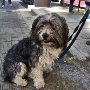 Conectar y olvidar: En La Palma, hay muchos perros abandonados - todavía está esperando la construcción de vivienda. Foto: BIANPA