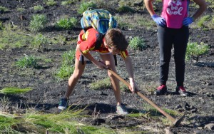 Schüler aus Mazo jäten Rabo de Gato an den Vulkanen in Fuencaliente: wohl nur ein Tropfen auf den heißen Stein... Foto: IES Mazo