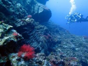 Tauchen auf La Palma: sehr besonders und im Vergleich nicht mal teuer. Foto: Georg Maghon