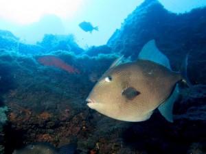 """Georgs kunden sagen, er kenne jeden Fisch mit Namen: Der hier heißt """"Drücker"""". Foto: Georg Maghon"""