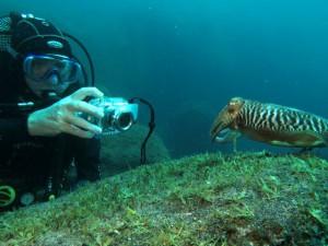 Georg taucht immer mit der Kamera ab: Außerdem gibt der Experte auch Tipps zur Unterwasserfotografie.