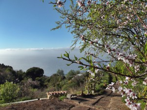 Hippieland im Nordwesten von La Palma: Blick von Susannes Haus in Las Tricias aufs Meer. Foto: La Palma 24