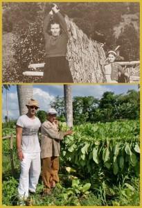 Tabakanbau auf La Palma: oben das Foto aus den 1950er-Jahren - unten Julio auf einer Finca im Jahr 2016.