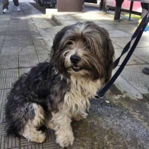 Hunde an die Leine und mehr: Los Llanos verschärft seinen Vorschriftenkatalog im Blick auf Haustiere in öffentlichen - und sogar privaten - Bereichen. Foto: BIANPA