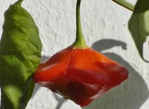 Bombilla-Blumen-Hella5