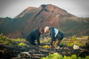 Winzer bei der Arbeit: Der WeinClub weist auch auf die schwierigen Bedingungen des Weinbaus auf La Palma hin. Foto: Javier Camacho Coello/Siegerbild Wettbewerb Kontrollrat für palmerische DO-Weine 2013