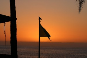 sunset-puerto-naos-vogel-michael-kreikenbom