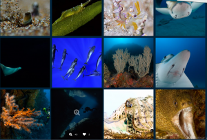 1.444 great photos: Divers from various countries took the great underwater worlds of the Canary Islands in the focus. Photos: Dive photo challenge Canarias