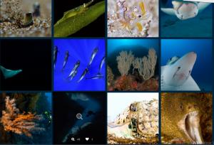 1.444 tolle Fotos: Taucher aus verschiedenen Ländern nahmen die tollen Unterwasserwelten der Kanaren in den Fokus. Fotos: Dive Photo Challenge Canarias