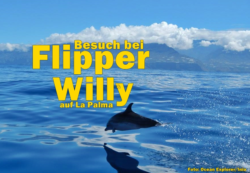 delfine-vor-la-palma-inia-foto-titel