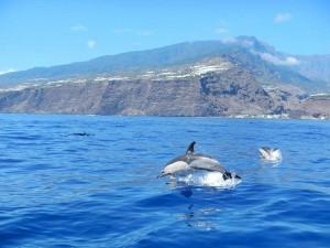 Freudensprünge: Delfine fühlen sich in den Meereswelten vor La Palma pudelwohl. Foto: Ocean Explorer/Inia
