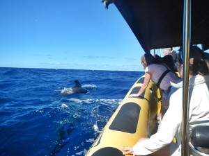 """Whale-Watching mit der Inia: Das schnelle Boot hat nach Angaben von Ocean Explorer """"besonders geräuscharme Motoren"""". Foto:"""